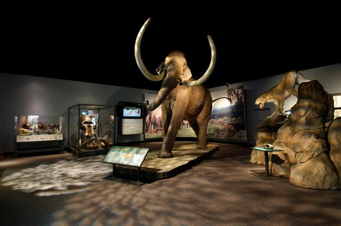 Exposición hecha a través de material reciclado en The field Museum in Chicago. After exhibition, Tanya Mohn. Imagen extraída de New York Times http://nyti.ms/P7fC3d